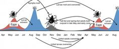 Climate change may affect tick life cycles, Lyme disease   News and Research…