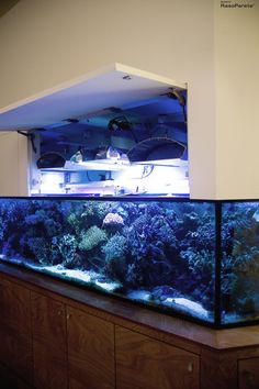 Wall Aquarium, Aquarium Stand, Aquarium Design, Marine Aquarium, Aquarium Fish Tank, Small Space Interior Design, Interior Design Living Room, Best Aquarium Filter, Saltwater Tank