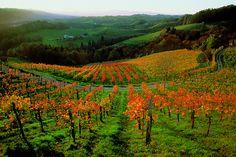 Austria's beautiful Wachua Valley Vineyards near Vienna.  via @Viking River Cruises