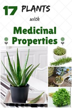 Do you like plants? Maybe you use them in the kitchen when you cook something, but certainly you did not know how many benefits of these plants throughout your house have on your body and for your health. Here in this article you will find a few plants that you can have them in your garden, in the house, and that are good for your health.