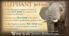 The most in-depth Elephant Symbolism & Elephant Meanings! Elephant as a Spirit, Totem, & Power Animal. Plus, Elephant Dreams, too! See all Animal Symbols!
