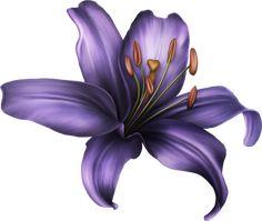 Клипарт от Vlada_Glinskaya....роскошный клипарт.. Обсуждение на LiveInternet - Российский Сервис Онлайн-Дневников Lilly Flower Drawing, Live Wallpaper Iphone 7, Colorful Flowers, Beautiful Flowers, Boarder Designs, Flower Art Images, 2 Clipart, Dragon Sleeve Tattoos, Hand Painted Fabric