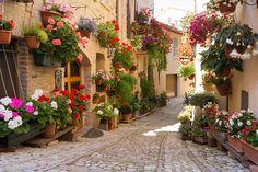 Rua em Spello, Umbria, Itália  #now #nowmaste #namaste