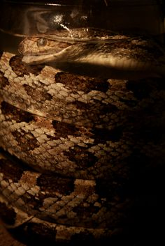 Wet Specimen - Snake