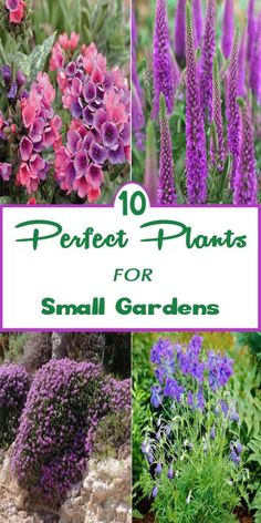 10 Perfect Plants for Small Gardens