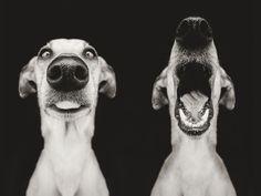 New Expressive Dog Portraits By Elke Vogelsang