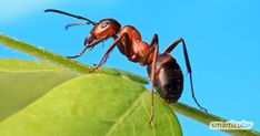 How To Get Rid of Ants — lifehacker Orcas, Animals With Backbones, Ants Marching, Ant Problem, Different Types Of Animals, Get Rid Of Ants, Especie Animal, Mosquitos, Patio