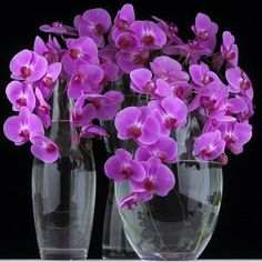 Vases for orchids Tulip Colors, Hydrangea Colors, Purple Tulips, Purple Orchids, Vase Transparent, Purple Wedding Bouquets, Phalaenopsis Orchid, Exotic Plants, Rare Plants