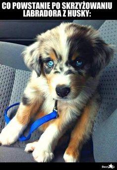 Słodka krzyżówka psy
