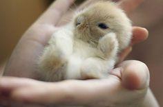 Hand-Held Bunny