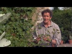 Monty Don Demonstrates How to do Hardwood Cuttings with Roses in the Aut...