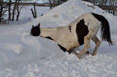 horse-in-snow.jpg (480×319)