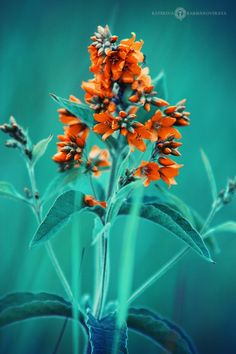 orange and teal Teal Yellow, Shades Of Turquoise, Orange And Turquoise, Rust Orange, Teal Colors, Green And Orange, Orange Plant, Orange Aesthetic, Aesthetic Dark