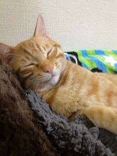 Ginger cat :]. Why is that orange/ ginger cats so often look like they are smiling...  Content with the world!