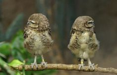 """Owl 1: """"I am not talking to you anymore""""  Owl 2: """"I am so mad, I can't even stand looking at you!!"""""""
