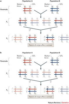 Genomic imprinting and parent-of-origin effects on complex traits