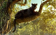 The gorgeous ‪#‎Bagheera from #TheJungleBook :]