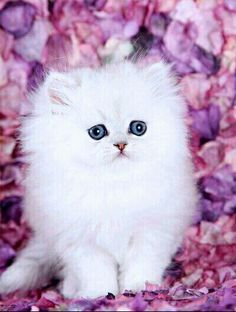 Pink Kitty ❤