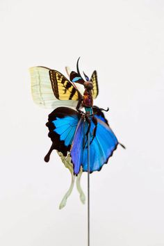 Cedric Laquieze Uses Parts Of Insects To Construct Exquisite Fairies
