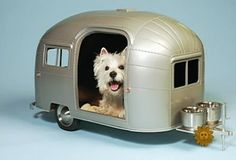 Replace dog with cat & Gizmo gets an Airstream before me...