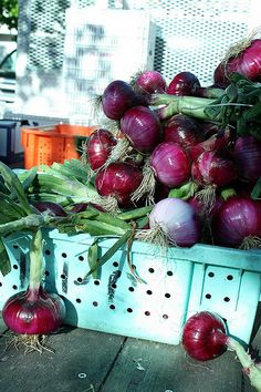 Red Onions Fresh from the Farm - Photo by Rosemary Bliss