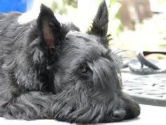 scottie - Yahoo Image Search Results