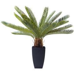 Deco Plant Cycas Tree 78cm - KARE Design