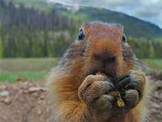Smile for the camera: 20  ridiculously photogenic animals
