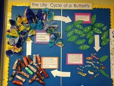 Living Things We have now begun our study of living things! We are growing butterflies in our class which is very exciting! The children ar. Spring Activities, Science Activities, Science Ideas, Science Fair, Life Science, Butterfly Bulletin Board, Life Cycle Craft, Kids Bulletin Boards, Butterfly Life Cycle