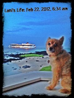 Lani watching the cruise ship by Keiki Ponds for Sunrise.... here every Wednesday!