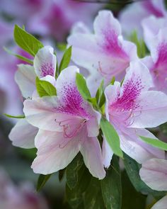 Azaleas Bring this beautiful flowering shrub into your home to combat formaldehyde from sources such as plywood or foam insulation. Because azaleas do best in cool areas around 60 to 65 degrees, they're a good option for improving indoor air in your basement if you can find a bright spot.