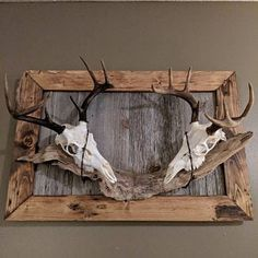 Taxidermy How Natural History - Taxidermy how – präparatoren wie – taxidermie comment – taxidermia como – taxid - Deer Hunting Decor, Deer Head Decor, Hunting Crafts, Pheasant Hunting, Taxidermy Decor, Taxidermy Display, Bad Taxidermy, Taxidermy Jewelry, Antler Crafts