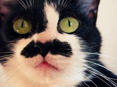 Haha Kitty Stache!