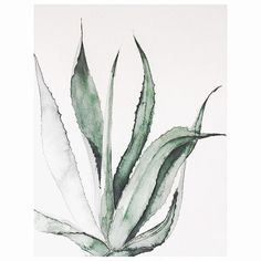 Oh my, I'm so excited! Finally I can tell you I'm working on my first book which is a collaboration with Aurum Press - London who invited me into this amazing project. It will be an illustrated indoor house plants book. The book is scheduled to be published in Spring 2017. So stay tuned! xx #workingonmyfirstbook #bookinprogress #indoorplants #urbanbotanic #agave #inprogress #plantlife #plants #instaplant