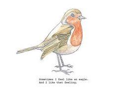 funny robin bird