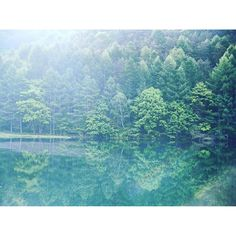 【i_kuri_ii】さんのInstagramをピンしています。 《throwback thursday☺︎ ♡が再燃編③。 Misyaka-ike,Nagano,Japan  奥蓼科にある御射鹿池。東山魁夷の緑響くの舞台になった所。 朝靄がかかった静かな湖面に鏡のように映る緑が本当に美しかった。紅葉もキレイだそうな🍁たのしみ(^^) #tbt  #tbthursday #travel #travelling #traveling #travelgram #memories #memory #旅 #旅行#旅の思い出  #nagano #forest #tree #trees  #japan #木 #森 #日本 #green  #信州 #pond #lake #mirror #reflection #東山魁夷 #landscape #morning #mirror #蓼科》