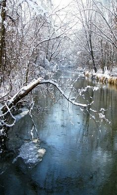 Winter River and Tree Photo Snow Ice Fine Art Photography