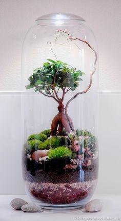 Installez un petit morceau de nature dans votre intérieur grâce à un terrarium humide : une ou deux plantes bien choisies, des mousses vivantes et des galets suffisent à réaliser de véritables petites scènes très naturelles.