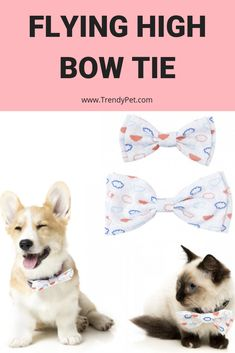 Feel like you're in the sky on top of the world with this dreamy FuzzYard Bow Tie! Your dog or cat will look super-smart in our range of colorful bow ties d Cat Gifts, Dog Lover Gifts, Cat Feeding Station, Elevated Dog Bowls, Pregnant Cat, Cat In Heat, Cats For Sale, Dog Insurance, Dog Bows