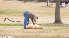 Lazy Dog Doesn't Want To Leave The Park | Gif Finder – Find and Share funny animated gifs