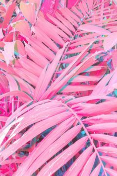 Life is Pink is life.