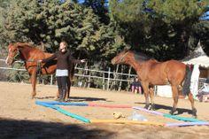 """Coaching y psicoterapia con caballos """"Tienes todas las respuestas. Las respuestas a tus preguntas deben salir de ti mismo""""Joseph O'Connor"""