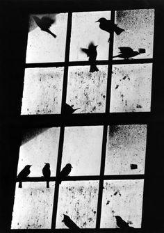 A. Aubrey Bodine - 10, Birds ca. 1950. °