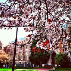 Almost cherry blossom season!!!