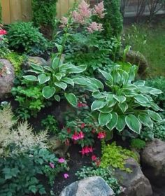 Gorgeous shade garden!