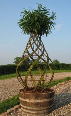 Braided willow topiary