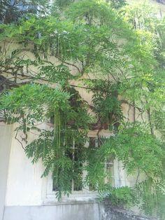 Tree vs house