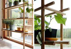Plantehylle i vinduet