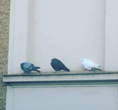 #bird #family  black & white = grey