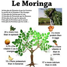 MoringaAff.png